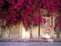 Кусты плетущихся цветов на доме