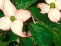 Цветок с четырьмя светлыми лепестками