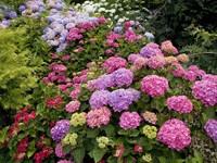 Цветущие кусты в саду