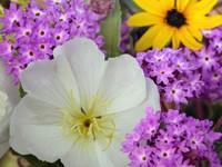 Разнообразные цветы