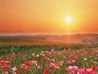 Цветочные луга на закате солнца