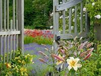 Калитка в цветущий сад