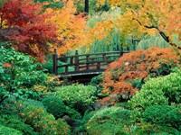 Осенний сад с мостом