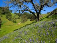 Склон с голубыми цветами