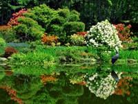 Пруд с цветущим берегом и цаплей