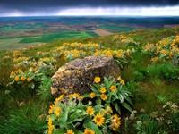 Склон в цветах и камнем