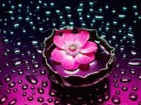 Розовый цветочек в воде