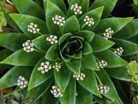 Зеленый цветок с белыми цветами