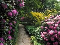 Дорожка в цветущем саду