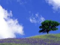 Фиолетовый луг с деревом на фоне неба