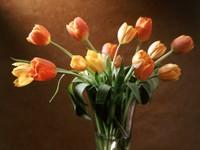 Оранжевые тюльпаны в стакане