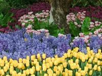 Клумба цветов под деревом
