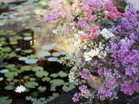 Цветущие кусты над прудом