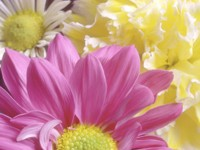 Разные цветы