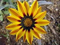 Желто-оранжевый цветок