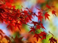 Красные листья на ветвях