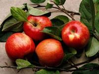 Четыре яблока в  зеленых листьях