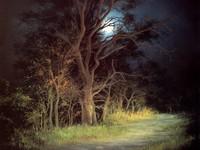 Освещенное дерево в темноте