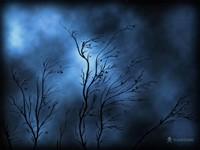 Тонкие опавшие деревья