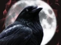 Ворон на фоне луны