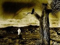 Ворон на дереве в пустыне