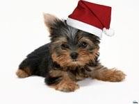 Щенок в шапке Санта-Клауса