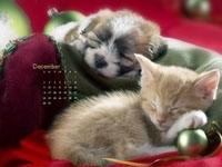 Спящий котёнок и щенок