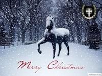 Лошадь и снег