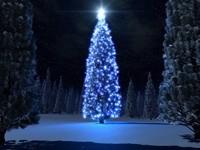 Ночная елка со звездой