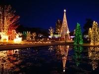 Новогодние елки у воды