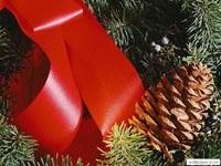 Шишка на елке с лентой