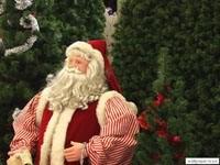 Санта возле елки