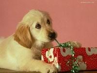 Щенок раскрывает подарок