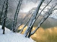 Зимние деревья у воды