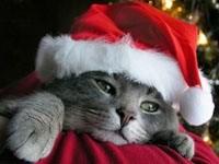 Котенок в шапке Санта-Клауса