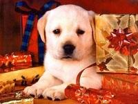 Щенок в подарках