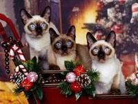 Трое котят в санях