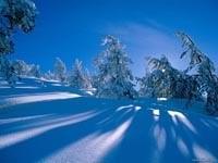 Тень от елок на снегу