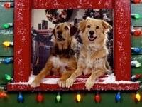 Две собаки из окна