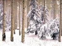 Спящий зимний лес