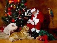 Санта с домашними питомцами