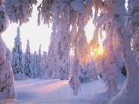 Засыпанные снегом елки