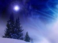 Елки в снегу ночью