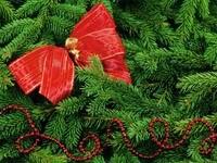 Красный бант на елке