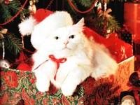 Белый кот из коробки