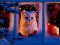 Белый кот выглядывает из окна