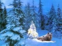 Волк в заснеженном лесу