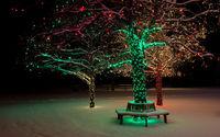 Деревья с новогодней подсветкой