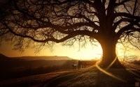 Закат за деревом
