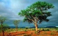 Дерево на природе